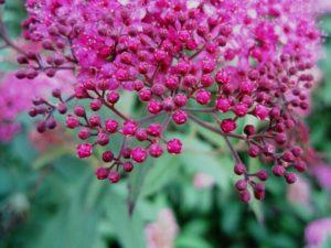flowers-209695_960_720