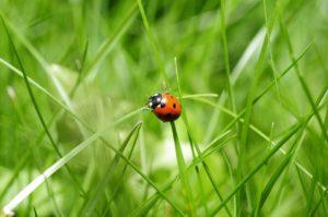ladybug-796481_960_720